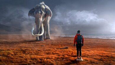 Photo of Naukowcy chcą wskrzesić mamuty!